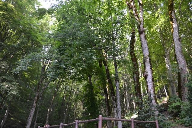 LA FORESTA DI LA VERNA